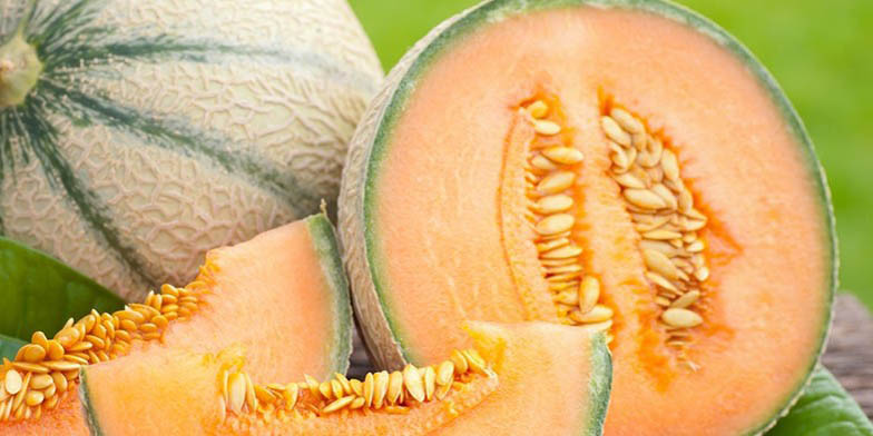 Honeymelon – description, flowering period. ripe melon in a section with seeds